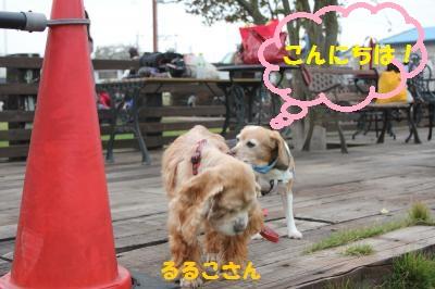 ai-20111103-saitama02.jpg