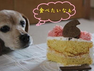 ai-20120419-cake02.jpg