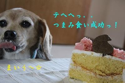 ai-20120419-cake03.jpg