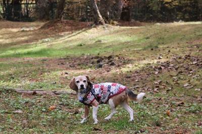 ai-20121109-doggypark03.jpg