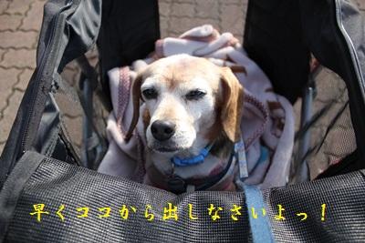 ai-20121217-sanpo01.jpg