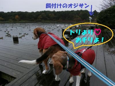 friai-20111119-ooike01.jpg