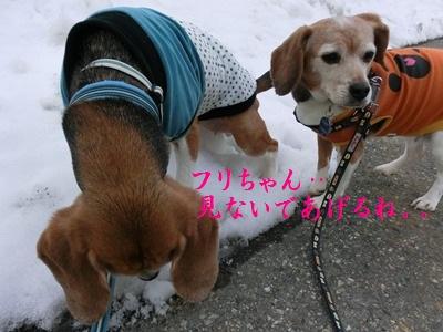 friai-20120215-tutaya01.jpg