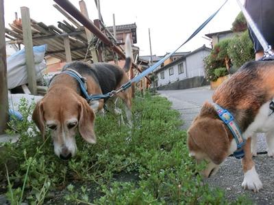 friai-20120906-sanpo02.jpg