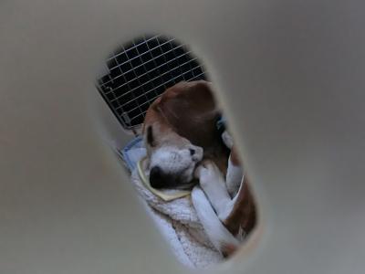 frida-2011102-car01.jpg