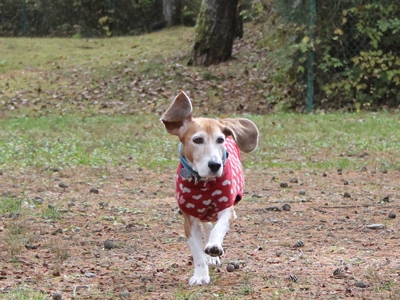 frida-20121109-doggypark07.jpg