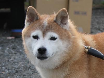 komame-20121013-satooyakai02.jpg