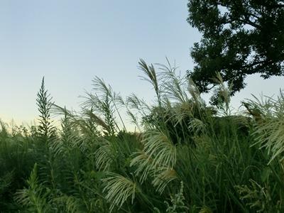 susuki-20120919.jpg