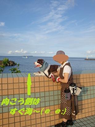 渚公園にて(ブロック塀上)