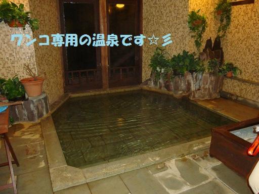 ワンコ専用温泉