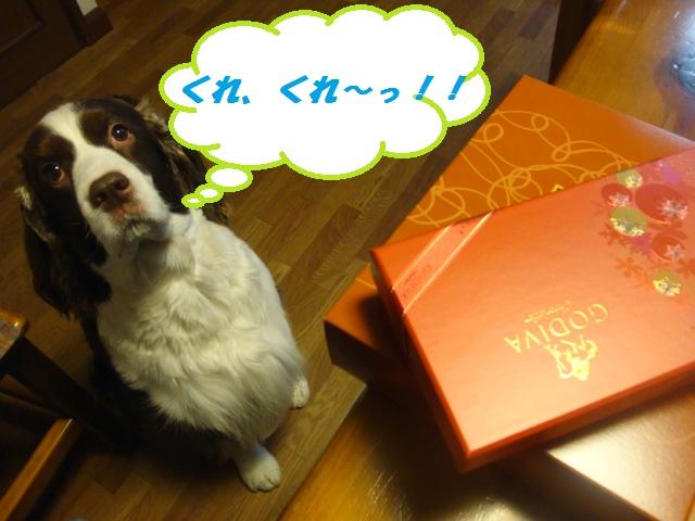 チョコ、くれ~!!