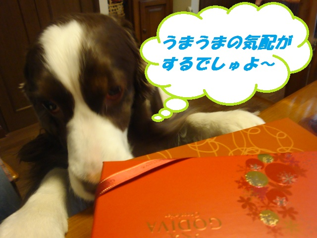 チョコチョコ、チェック~☆