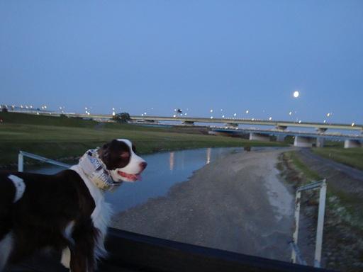 満月とジャスミン
