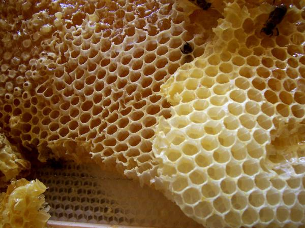 Honey_comb_convert_20130127143730.jpg