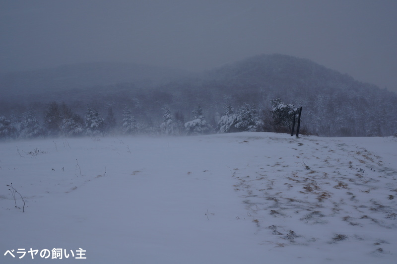 BNK_SNOW-2_DSC03545.jpg