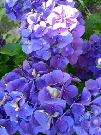 PICT0436_convert_20100812074112.jpg