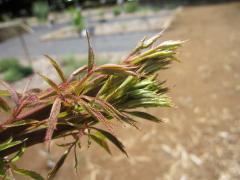 20100605つくば植物園09
