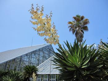 20100605つくば植物園11