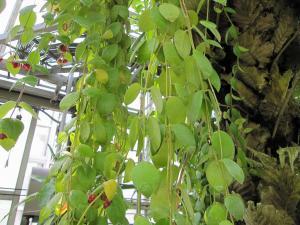 20100605つくば植物園12
