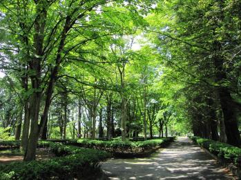 20100605つくば植物園30