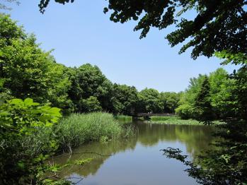 20100605つくば植物園32