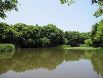 20100605つくば植物園33