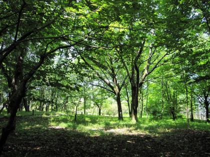 20100605つくば植物園48
