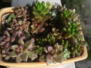 20090413保育園鉢
