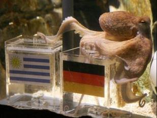 4161729467-tintenfisch-paul-sieht-dfb-sieg-uruguay-voraus.jpg