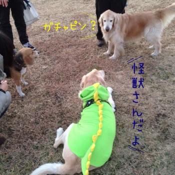 blog5_20140124230330971.jpg