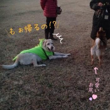 blog7_20140124230332d85.jpg