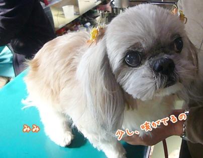 101228_mifami_san_01.jpg