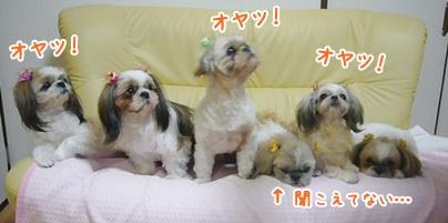 110111_mimifami_03.jpg