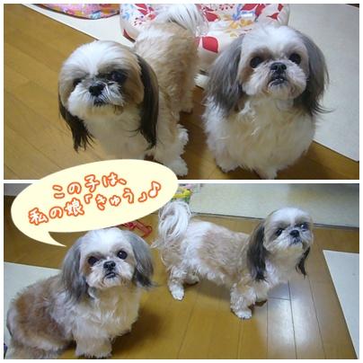 110201_nana_02.jpg
