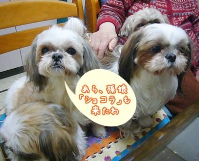 110201_nana_04.jpg