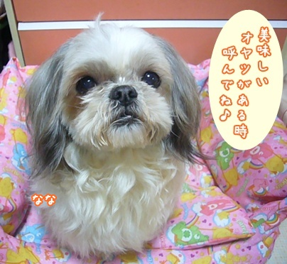 110201_nana_05.jpg