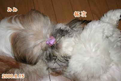 111109_mimitaku_01.jpg