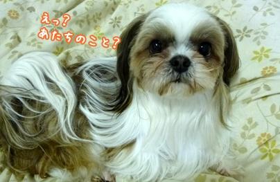 120128_ta_cho_05.jpg