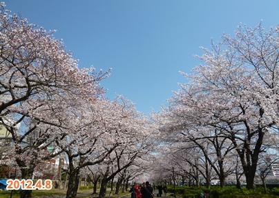 120408_sakura2_01.jpg
