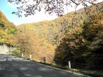 紅葉サイクリング(安ヶ森林道)5
