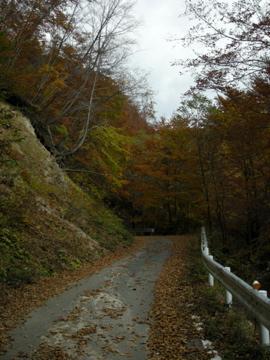 紅葉サイクリング(安ヶ森林道)16
