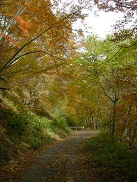 紅葉サイクリング(安ヶ森林道)17