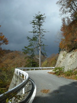 紅葉サイクリング(安ヶ森林道)23