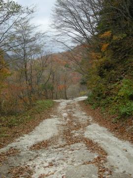 紅葉サイクリング(安ヶ森林道)25