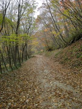 紅葉サイクリング(安ヶ森林道)29