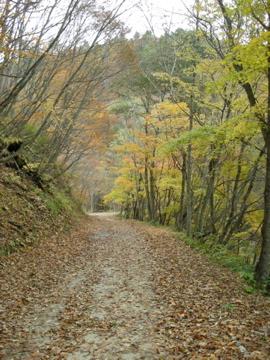 紅葉サイクリング(安ヶ森林道)32