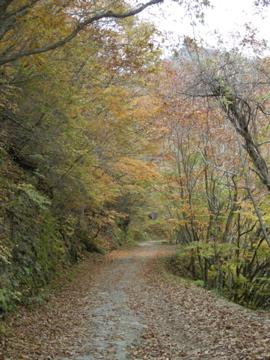 紅葉サイクリング(安ヶ森林道)35