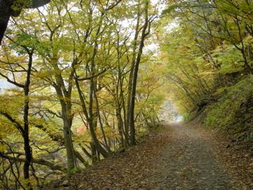 紅葉サイクリング(安ヶ森林道)39