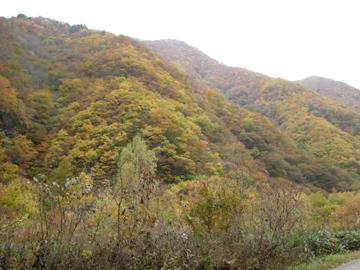 紅葉サイクリング(安ヶ森林道)42