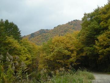 紅葉サイクリング(安ヶ森林道)46